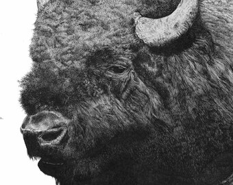 Bison Study/North American Bison/Buffalo/Pen and Ink/Wildlife Art
