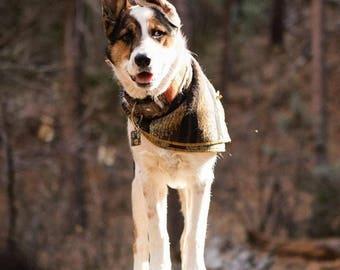Titan. Boho Dog Bandana | Boho Dog Scarf | Dog Bandana | Winter Dog Bandana |