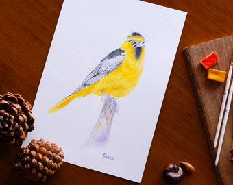 Yellow Bird Watercolor Bullock's Oriole Bird Painting Original Watercolor Bird Nursery Wall Art Bird Lover Gift Idea Bird Illustration