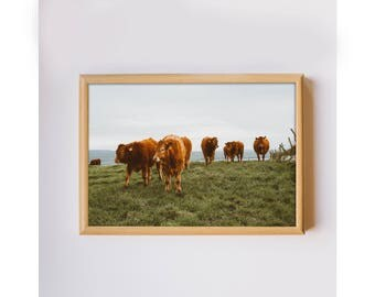 Travel photography Cliffs of Moher Ireland original photo cows countryside home decor photo art print downloadable printable wall art