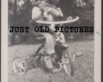 Cute little boy on tricycle holding puppy dog old vintage photo/snapshot/photograph-e124
