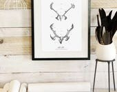 Antler Study Caribou- Nordic Collection - Beautifully textured cotton canvas art print. Order as a 5x7 8x10 11x14 or 16x20 size.