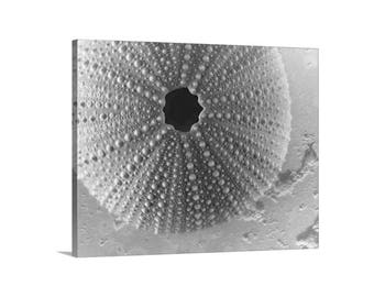 Sea Urchin, Shell Art, Giclee Canvas Print, Bathroom Picture, Seashell Art, Black and White, Wall Art Canvas, Gallery Wrap, Gift