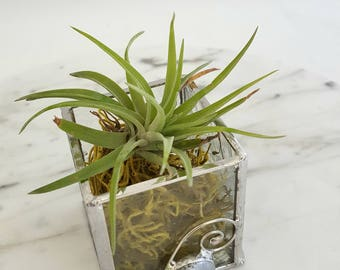 air plant or succulent planter in clear stained glass