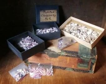 Seashell collection, miniature seashells, instant collection, Sailors Valentine supplies