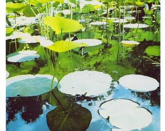 Pads - A3 Risograph print - lily pads