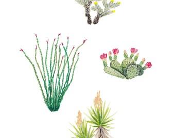 Joshua Tree Cacti 5x7 Art Print - Flowering Cactus Plants Giclée Print