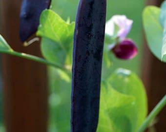 Pea 'Blauwschokkers' (Blue-Podded Pea) [20 Seeds]