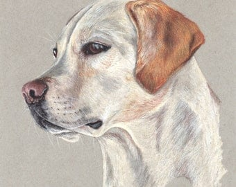 Yellow Labrador Retriever Print
