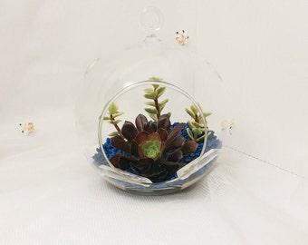 Queen around the Globe,  Succulent terrarium with blue rocks, sleek indoor home decor, modern hanging glass, diy kit, cactus garden
