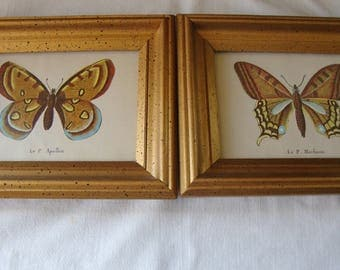 2 Vintage FRAMED BUTTERFLY PRINTS Le P Machaon Le P Apollon Small Wall Framed Pictures Wall Art Science Nature Butterfly Specimen Pictures