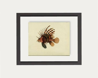 Fish Wall Art Print   Printable  Fish Instant Download   Gift for Dad Boyfriend Fisherman