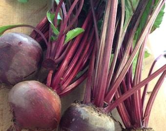 BULK: BEET  *300 Seeds* Vegetable Garden - Fresh Quality Seed & High Germination