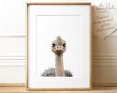 Baby animal nursery art, Ostrich print, PRINTABLE art, The Crown Prints, Animal prints, Nursery prints, Nursery wall art, Nursery decor, Emu