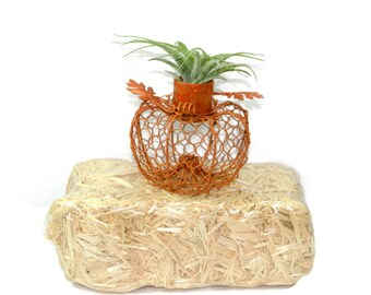 Decorative Terracotta/Orange/Silver Pumpkin Air Plant Planter/Candle Holder