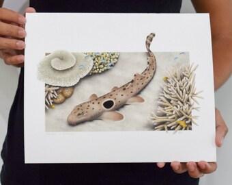"""Epaulette Shark - Hemiscyllium ocellatum - Giclée Print 8""""x10"""""""