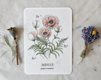 Papaver - Card