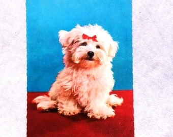 Vintage Young Maltese Postcard Vintage Dog Postcard Antique Maltese Postcard Collectible Postcard