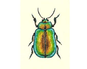 "Beetle illustration // Postcard sized - A6, 4.1"" x 5.8"""