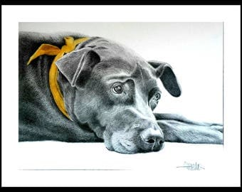 CUSTOM PET PORTRAIT from your favorite photo, Labrador, Custom Dog Portrait, Custom Pet drawing, Gift for her.