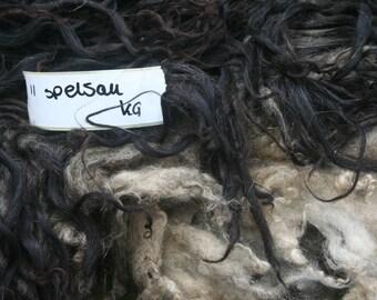 Spelsau raw fleece 1.7kg/3.75lb