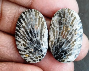 New year sale 24.70cts Black Coral Pair natural Gemstone ,cabochon , smooth, oval  shape, 24x15x3m size, AM101