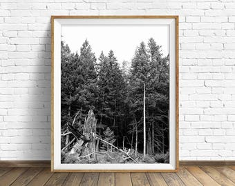 "landscape photography, digital photography, instant download printable art, black and white, wall art, wall art prints - ""Forest Growth"""
