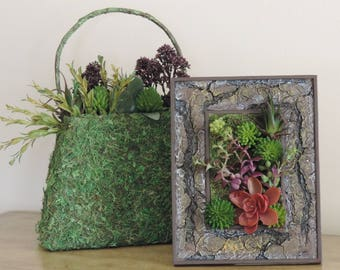 Artificial succulent arrangement in tree bark picture frame, with real preserved moss