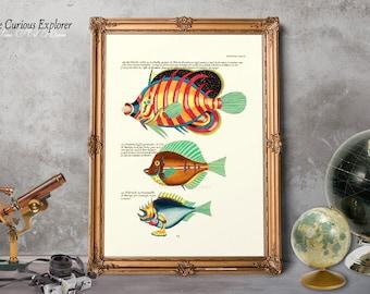 Exotic Goldfish Art, Fish Illustration, Exotic Fish Decor, Home Fish Prints, Fish Print Gift, Coastal Art Prints - E21_14