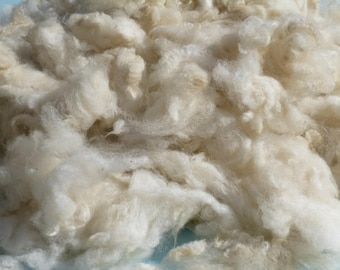 Raw alpaca fleece from Snow Princess, clouds of white, lightly hand-washed and air dried blanket fiber, available by the ounce
