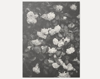 In Full Bloom No.1 - Art Print