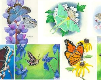 Minnesota Butterflies and Moths