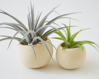 SALE 20% OFF! Bell Cup Tillandsia Planter // Air Plant Holder
