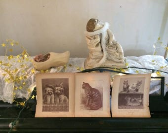 Victorian Storybook Illustrations. Beautiful Dogs and cats set of 3. Tattered and beautiful. Portions of stories on backs.