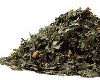 Sassafras (Sassafras albidum) Leaf Kosher Herb 1g-2kilos