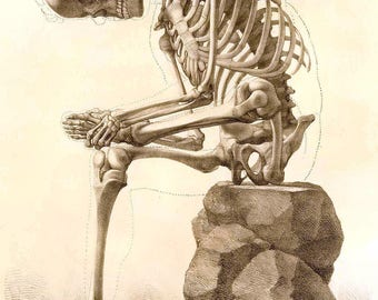 19th Century Natural History Anatomical Skeleton Repro Art Print by Francesco Bertinatti