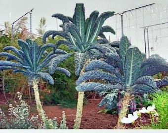 Giant Kale 10 Seeds