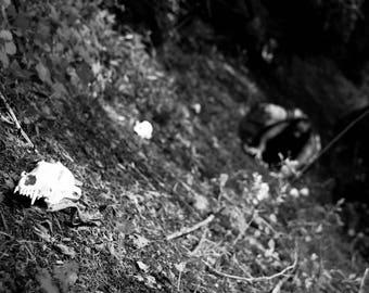 Lurking in the Bone Yard