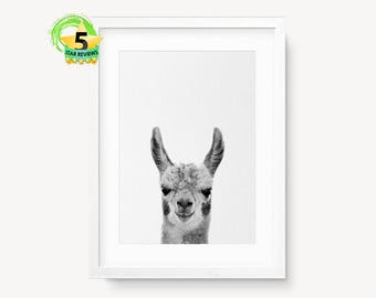 Alpaca Print, Llama Print, Black and White Nursery Print, Animal Decor Wall Art, Alpaca Poster, Llama Poster, Alpaca Photo, Alpaca Wall Art