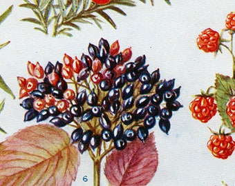 Set of Four Vintage Fruits Charts #1