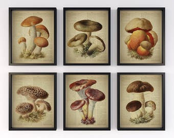 Vintage botanical prints, Set of 6 prints, Dictionary page art, Antique mashroom illustration, Print for wall, Set of 6 wall art, 8x10 JPG