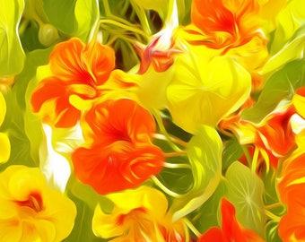 Nasturtium Flowers - Digitally Enhanced 8x10 Photo Print