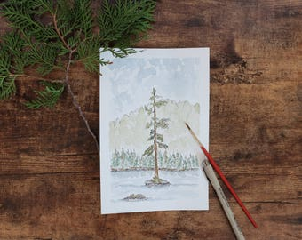 Evergreen Tree in the Mountains