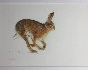 Hare print, brown hare art, fine art print, wildlife art, folk art print, coloured pencil illustration, brown hare, mounted print, hare