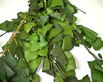 Preserved Ivy (Hedera Helix) Leaves,Preserved leaves, Green leaf, Preserved leaf for craft, Bouquet of leaves