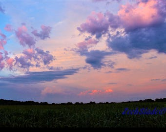 Cornfield Sunset