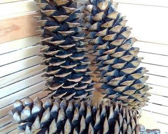 Trio of natural sugar pine pinecones, eco-friendly home decor, mountain lodge