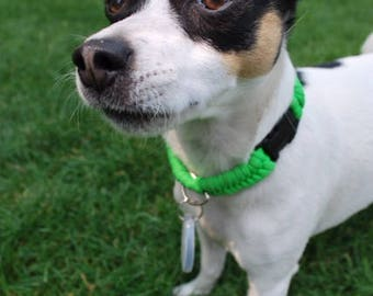 Lime Green Fishtail Dog Collar, Has Ring For Tags