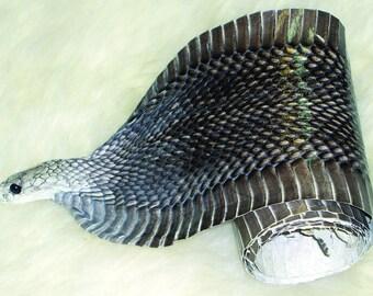 Exotic Full Cobra Snake Skin with Head
