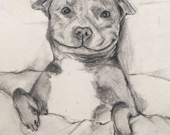 Original Charcoal Sketch | pitbull | 9x12""